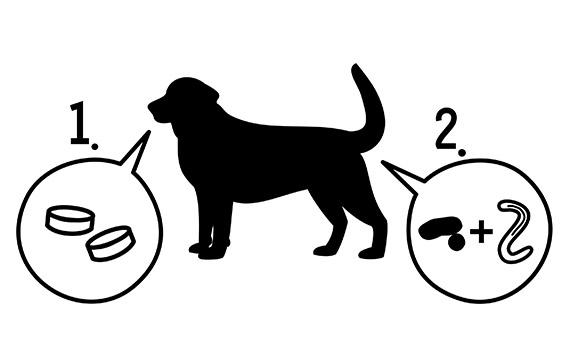 Woran Erkenne Ich Ob Mein Hund Wurmer Hat