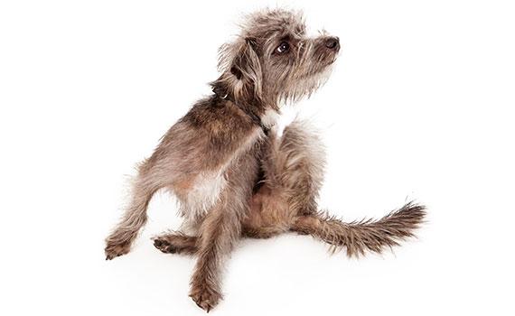 Hund erbricht weißen schleim
